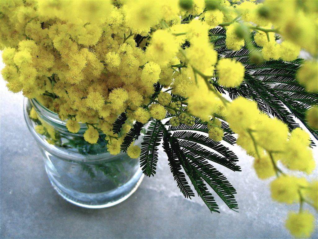 immagine di mimose nel vaso di vetro